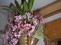 Orchideen-c_22_1_06