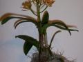 Orchideen-c_22_1_08